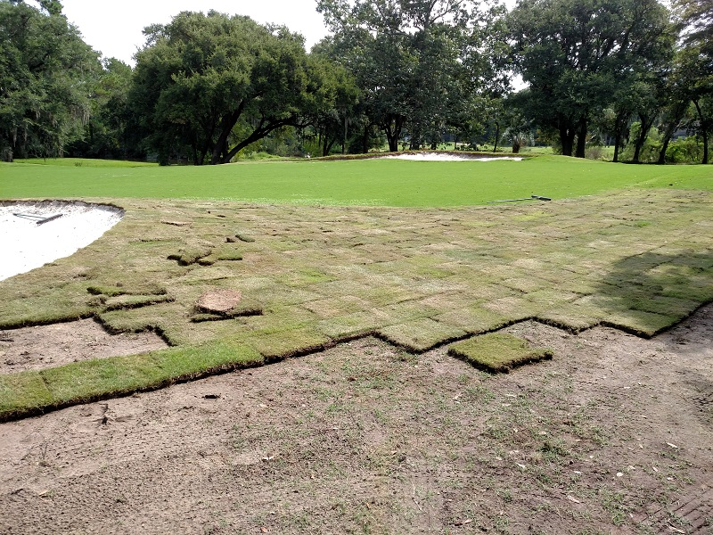 sod around 29464 golf green